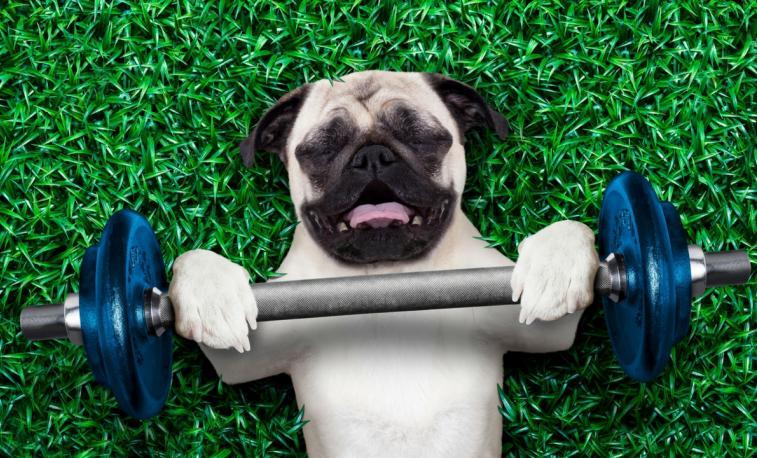 Cachorrinho fazendo exercicios