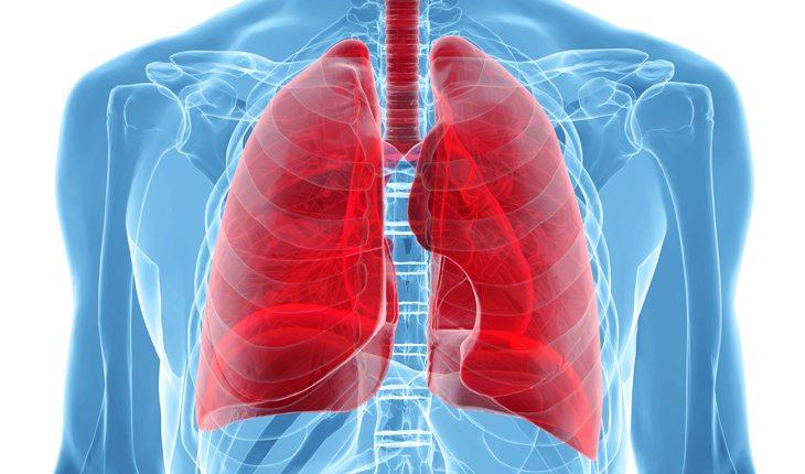 ilustração de um pulmão damasco