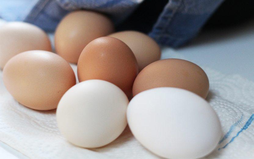 ovo, principal fonte de albumina