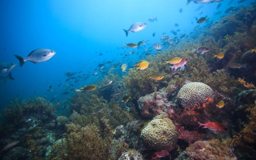 arquipélago de alcatrazes