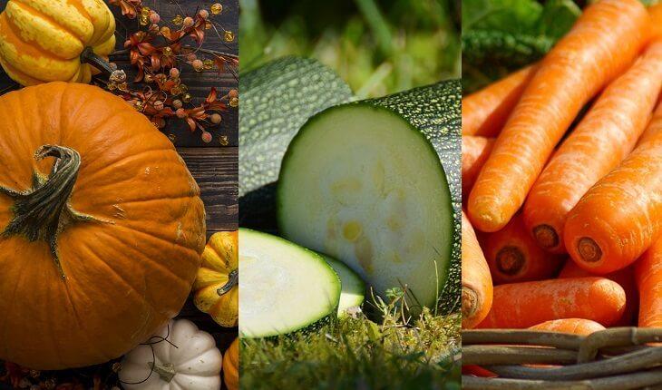 Frutas, legumes e verduras da época. Abóbora, abobrinha e cenoura