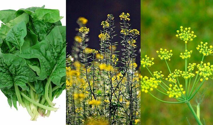 Espinafre, mostarda e erva-doce. Frutas, legumes e verduras da época.