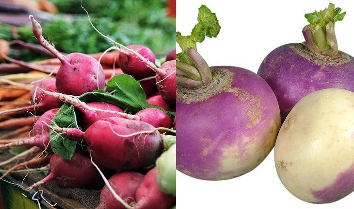Rabanete e nabo. Frutas, legumes e verduras da época.