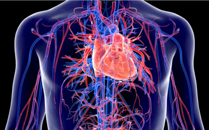 Sistema cardiovascular também pode ser afetado pela Covid-19