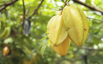 Economia no bolso e saúde na mesa com as 5 frutas do inverno