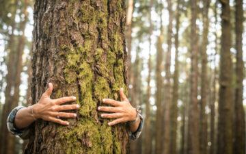 Meio-ambiente: o que podemos fazer no dia a dia para ajudá-lo?